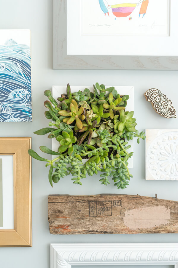 Hanging Succulent Frame | this heart of mine
