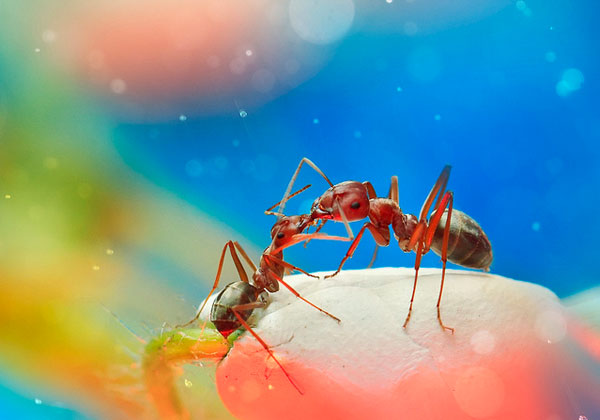 Surreal Macro Photographs of Insects photography nature insects