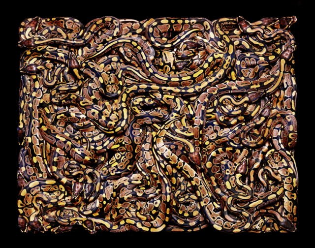 Guido Mocaficos Magnificent Rectangular Serpents snakes photography