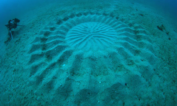 Mysterious Underwater Crop Circles Discovered Off the Coast of Japan nature Japan fish