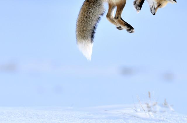 Winners of the 2012 Wildlife Photographer of the Year nature animals