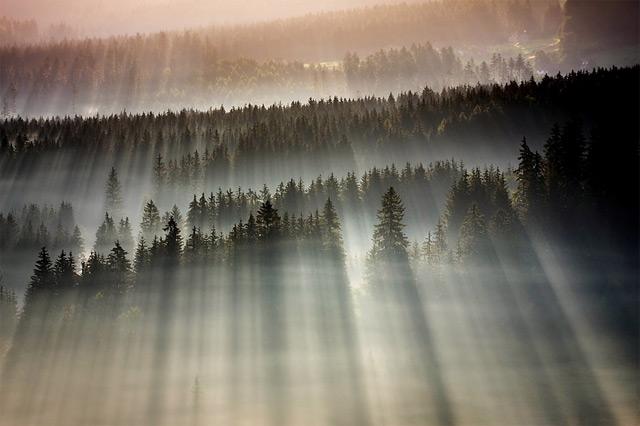 https://i0.wp.com/www.thisiscolossal.com/wp-content/uploads/2012/11/fog-4.jpg