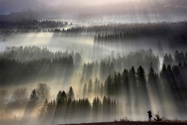 Forests Drenched in Light and Fog by Boguslaw Strempel trees Poland light landscapes Czech Republic