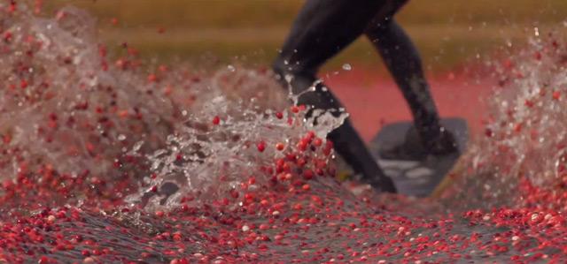 Cranberry Bog Wakeboarding surfing stunts sports fruit