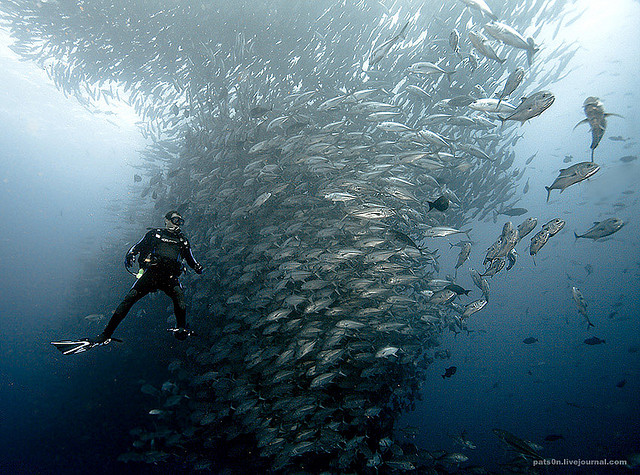 Software Architect Turned Photographer Alexander Safonov Captures Breathtaking Underwater Scenes off the Coast of South Africa south africa sharks ocean nature fish dolphins