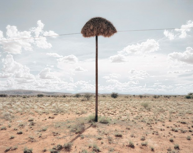 Massive Bird Nests Built on Telephone Poles in Southern Africa are Home to Multiple Species of Birds nests nature birds Africa