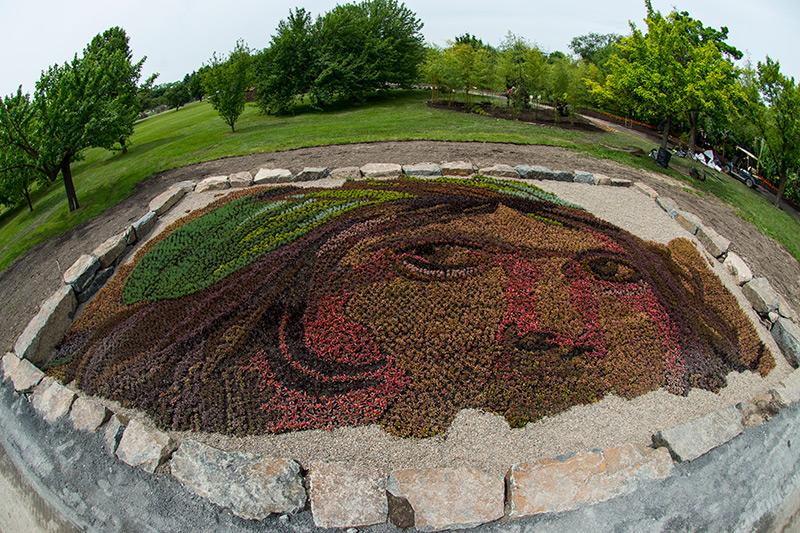 Monumental Plant Sculptures at the 2013 Mosaicultures Internationales de Montréal plants gardening