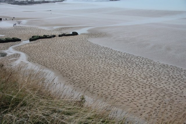 9,000 Fallen Soldiers Etched into the Sand on Normandy Beach to Commemorate Peace Day WWII war sand Normandy installation