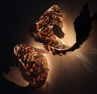 Fish Lamps by Frank Gehry | Colossal