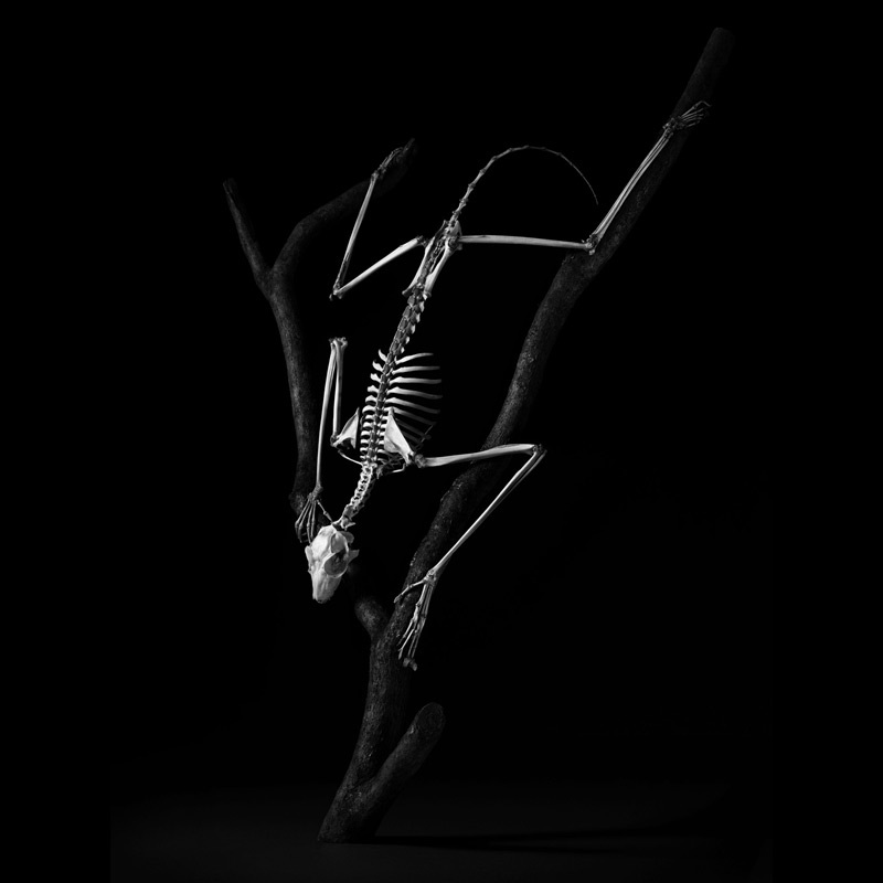 Evolution: A Stunning Monochromatic Exploration of Vertebrate Skeletons by Patrick Gries bones black and white anatomy