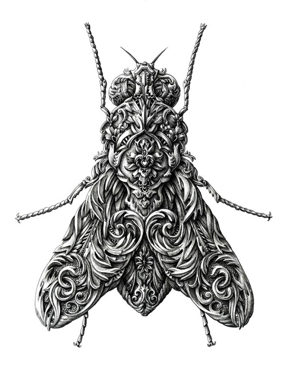Ornate Insects Drawn Alex Konahin Colossal