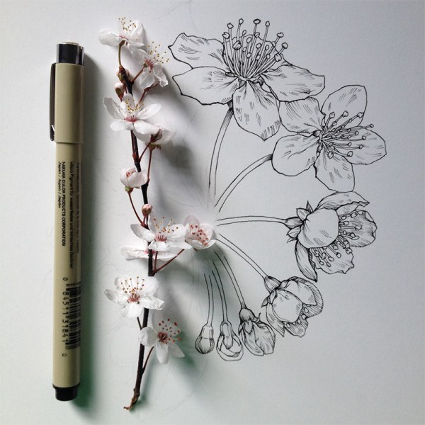 Illustration Drawing Flowers