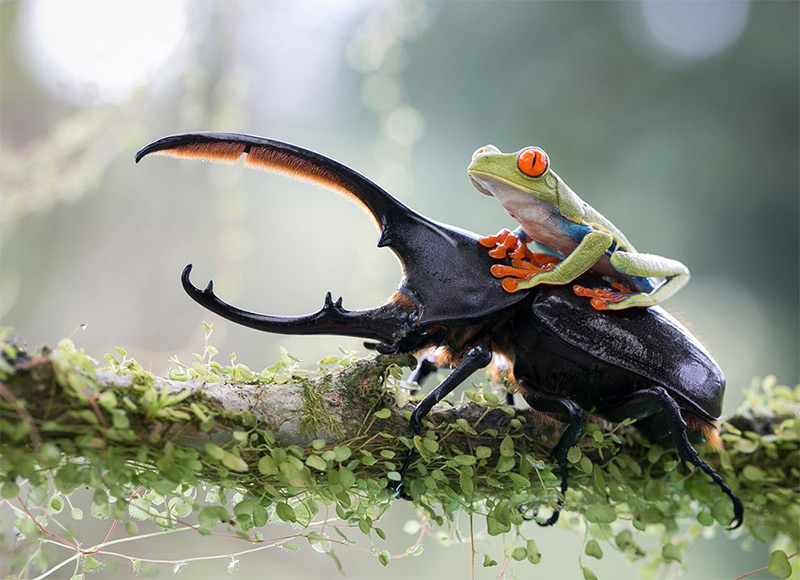Highlights from the 2014 Sony World Photography Awards Shortlist nature contests