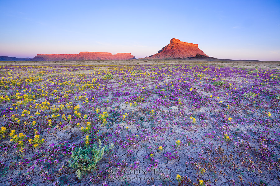 Good Badlands: Dry Terrain of the American West Captured in a Brief Moment of Color by Guy Tal nature landscapes flowers deserts