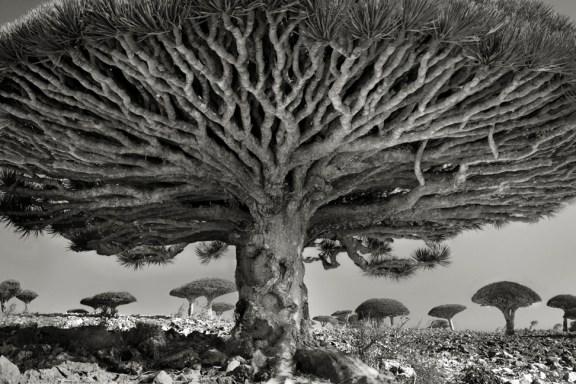 Resultado de imagem para beth moon ancient trees