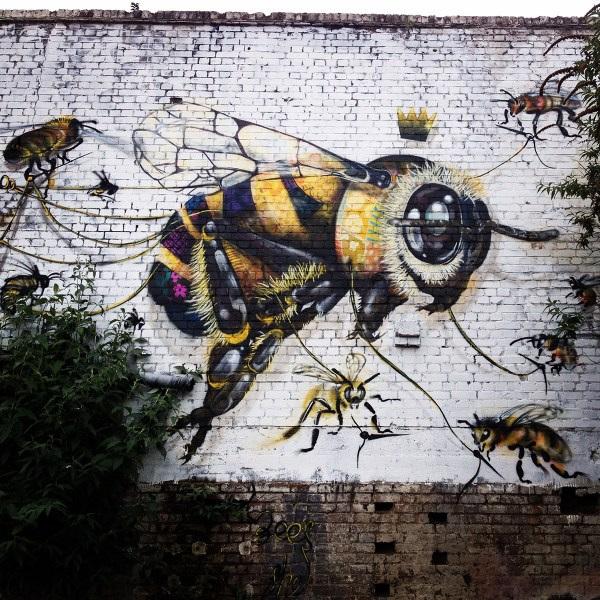 Bees and Colony Collapse Disorder