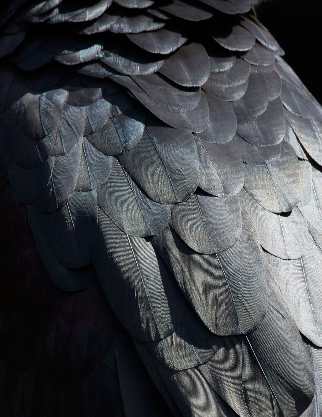 thomaslohr_Birds_16