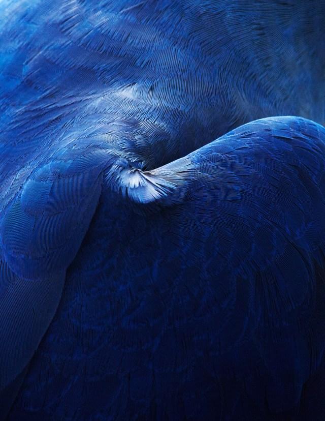 thomaslohr_Birds_21