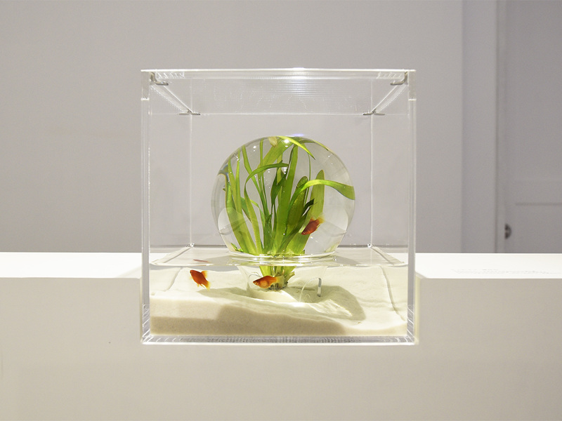 Minimalist Aquariums Filled With 3D Printed Flora by
