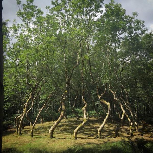 Ash Dome Secret Tree Artwork In Wales Planted David