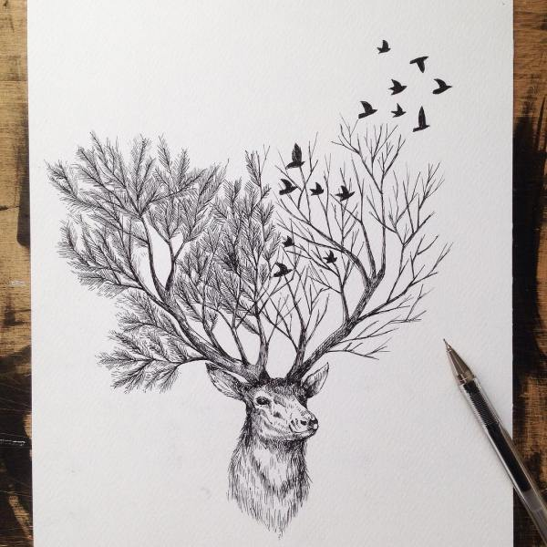 Pinterest Deer Drawings