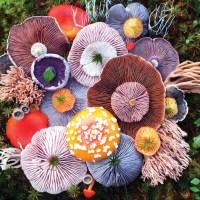 Vibrant Mushroom Arrangements Photographed