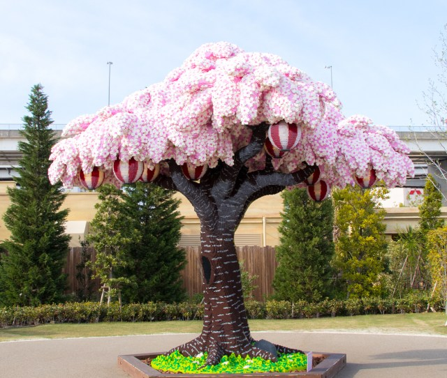 A Record Breaking Lego Tree Has Taken Shape At Legoland Japan A Theme Park In Nagoya Dedicated To The Beloved Plastic Bricks The Cherry Trees