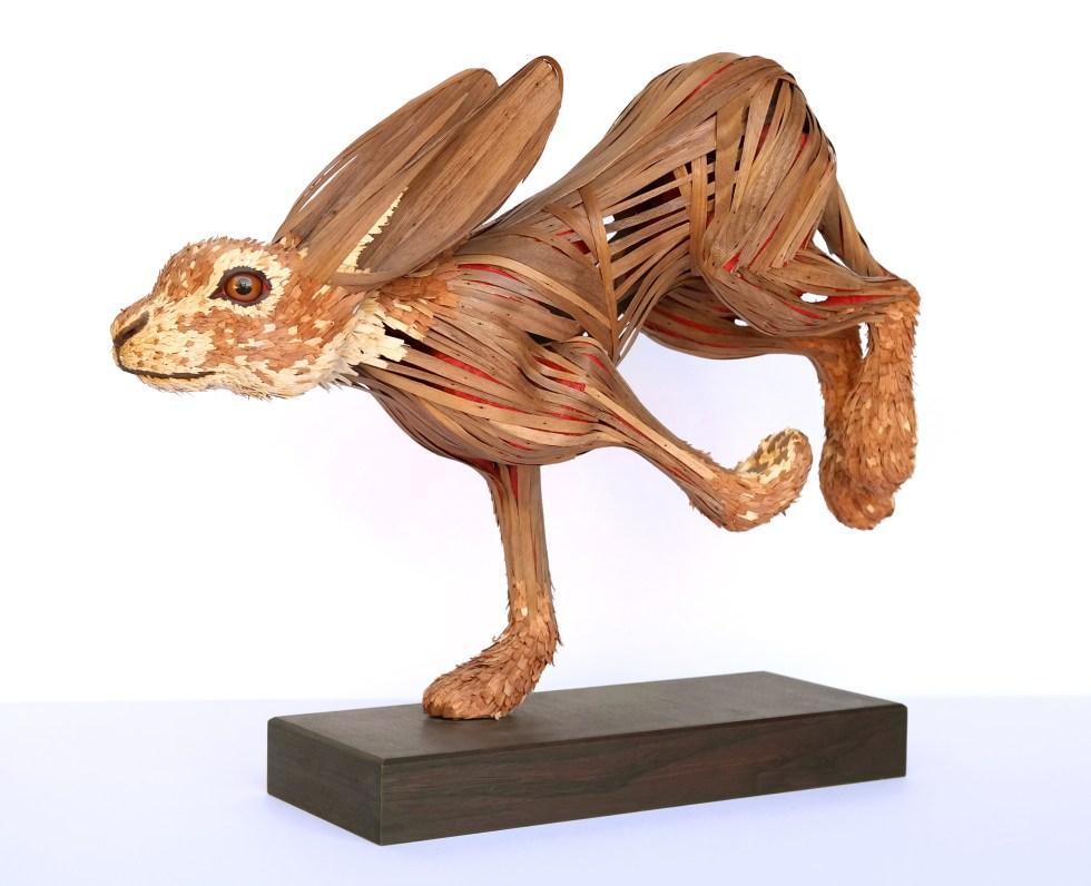 """""""Jack Rabbit (Lepus Californicus)"""""""
