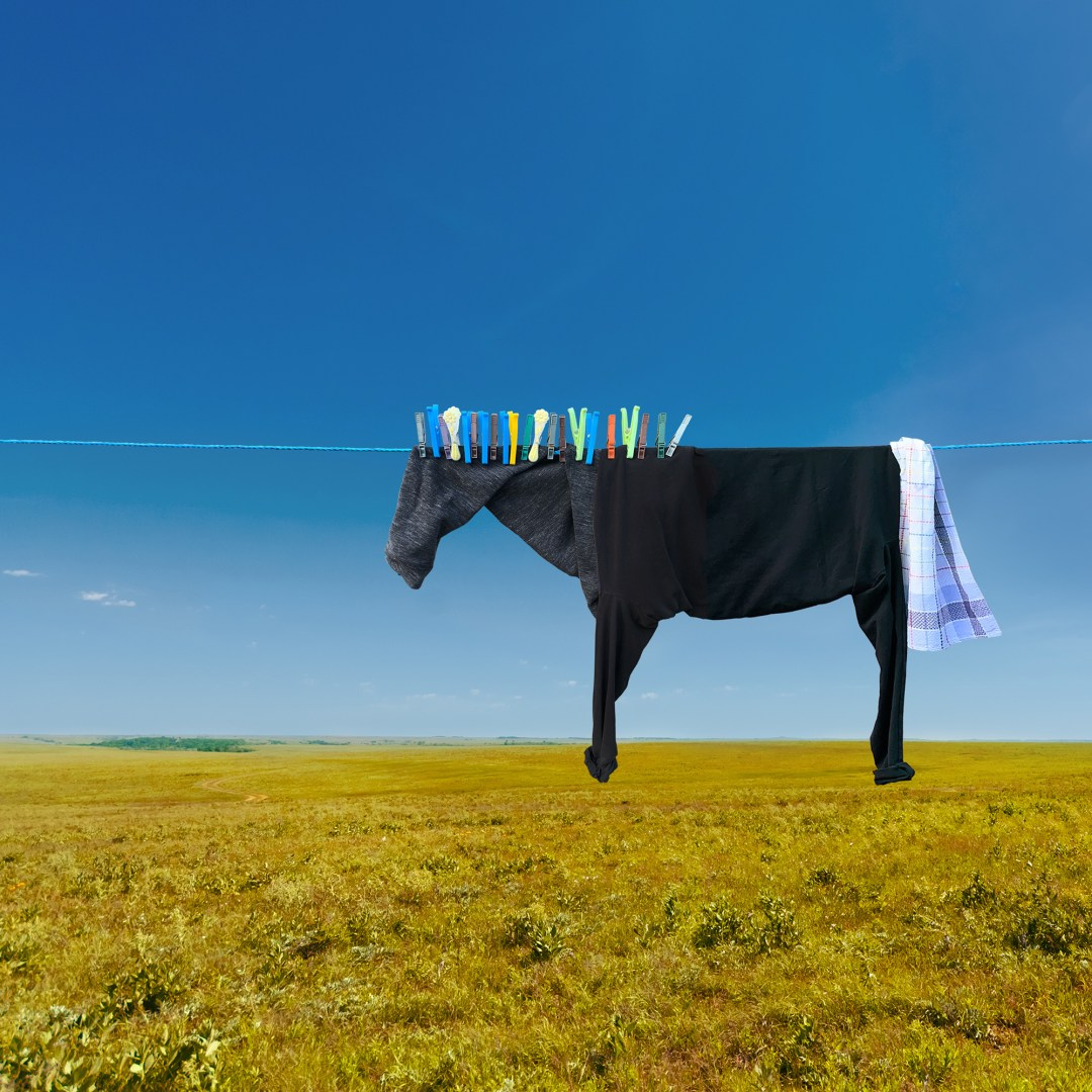Clothesline Farm Animals Graze the Countryside in Playful Illusions by Helga Stentzel