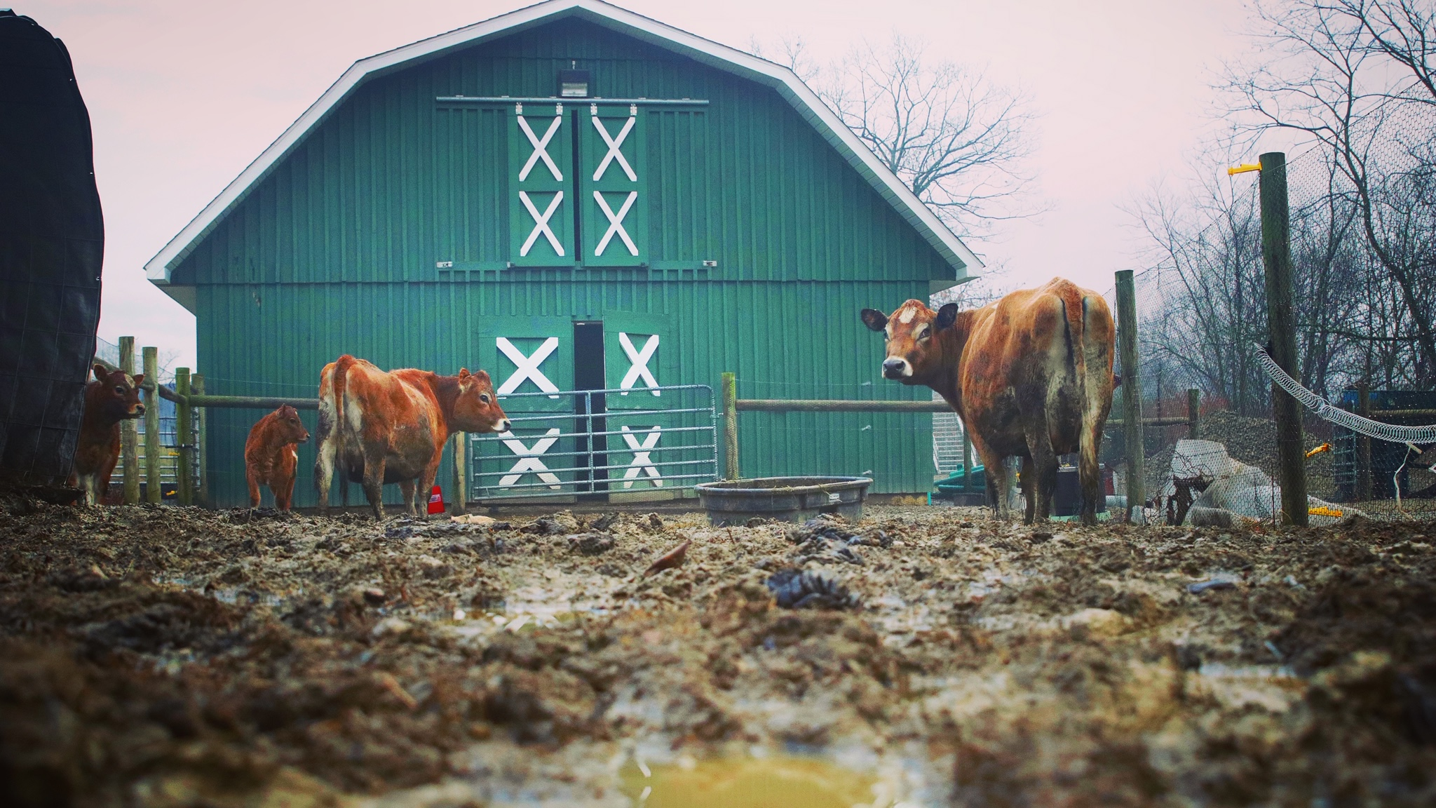 No More Mud A Simple Solution To Livestock Mud Problem