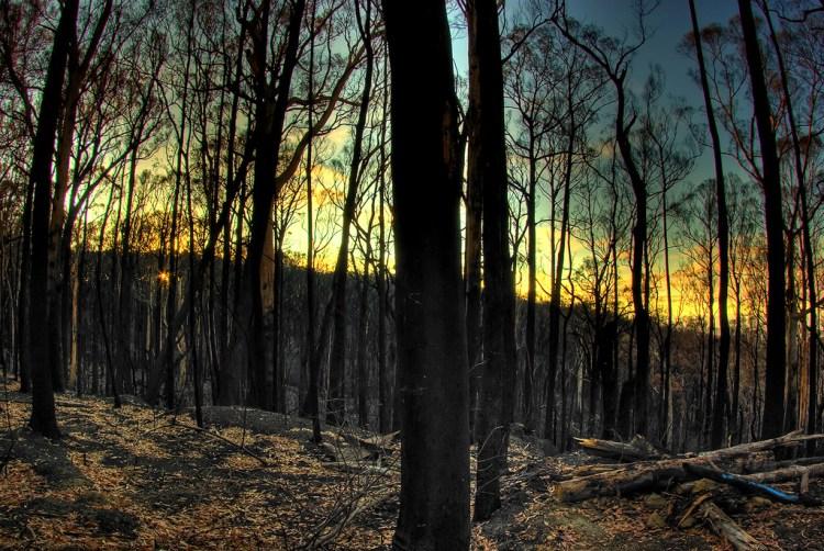 Australian horror woods