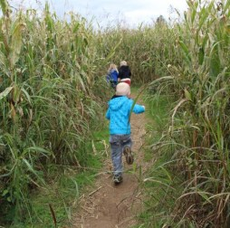 Corn maze at Deere Farms e