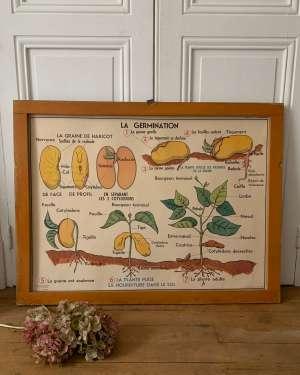 affiche ancienne mdi botanique