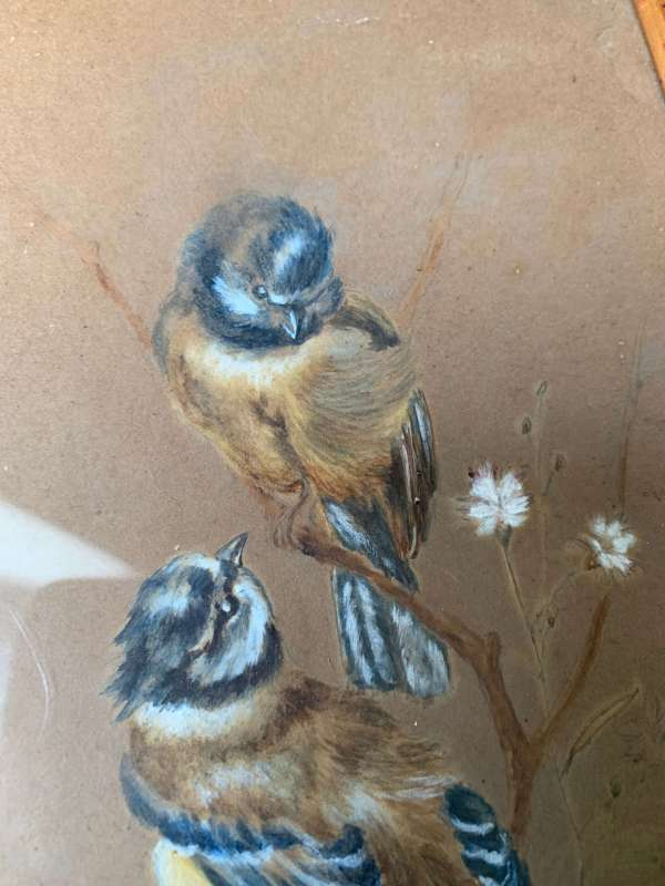ancien pastel oiseaux