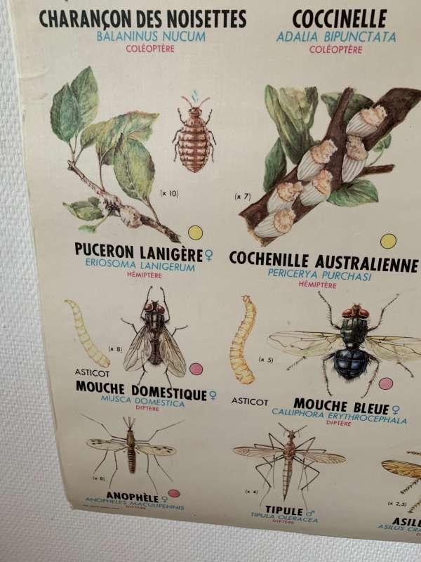 affiche mdi vintage les insectes