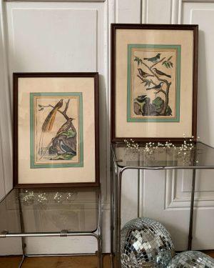 ancienne gravures rehaussée oiseaux
