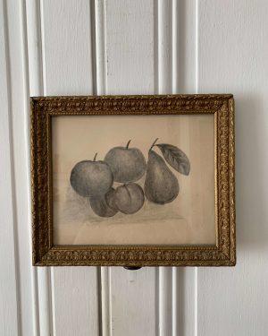 ancien dessin fruits au crayon nature morte