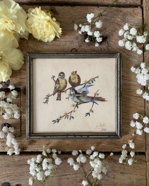 ancien dessin a l'aquarelle petits oiseaux