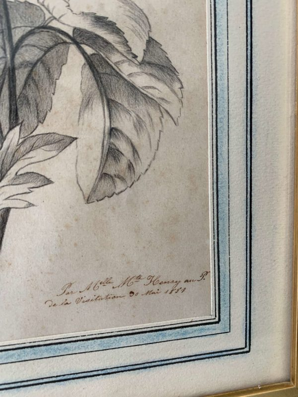 anciens dessins de fleurs au crayon vers 1850