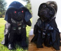 Star Wars Dog Costume