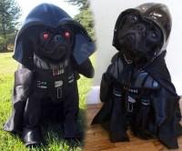 Star Wars Dog Costume - Hot Girls Wallpaper