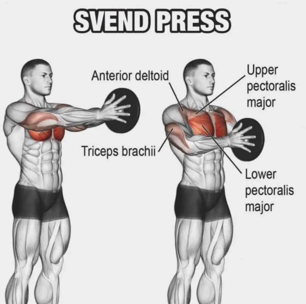 Muscles Used in the Svend Press