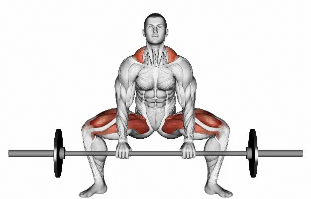 What Muscles Do They Work?