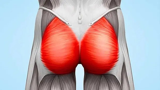 glute muscle