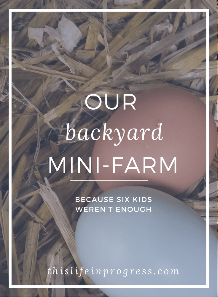 Backyard Farming | Stepfamily | Urban Homesteading |  Blended Family | Helping Kids Cope | Bees | Backyard Chickens | The Garden Coop