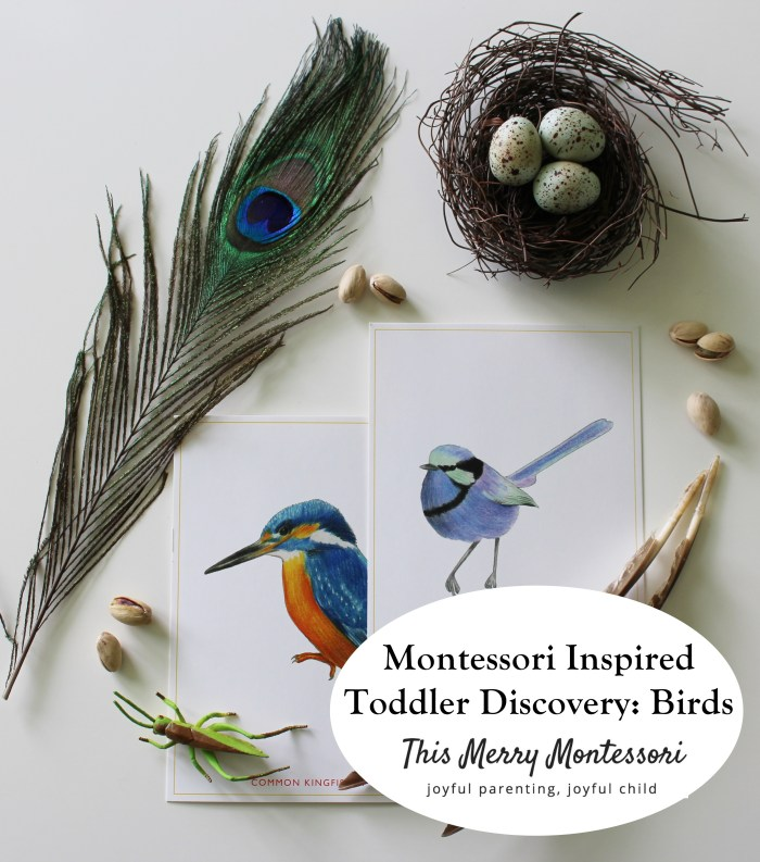 Toddler Discovery-Birds--TMM