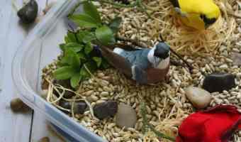 Spring Bird Sensory Bin Craft for Kids #Craft #DIY #SensoryBin #Spring