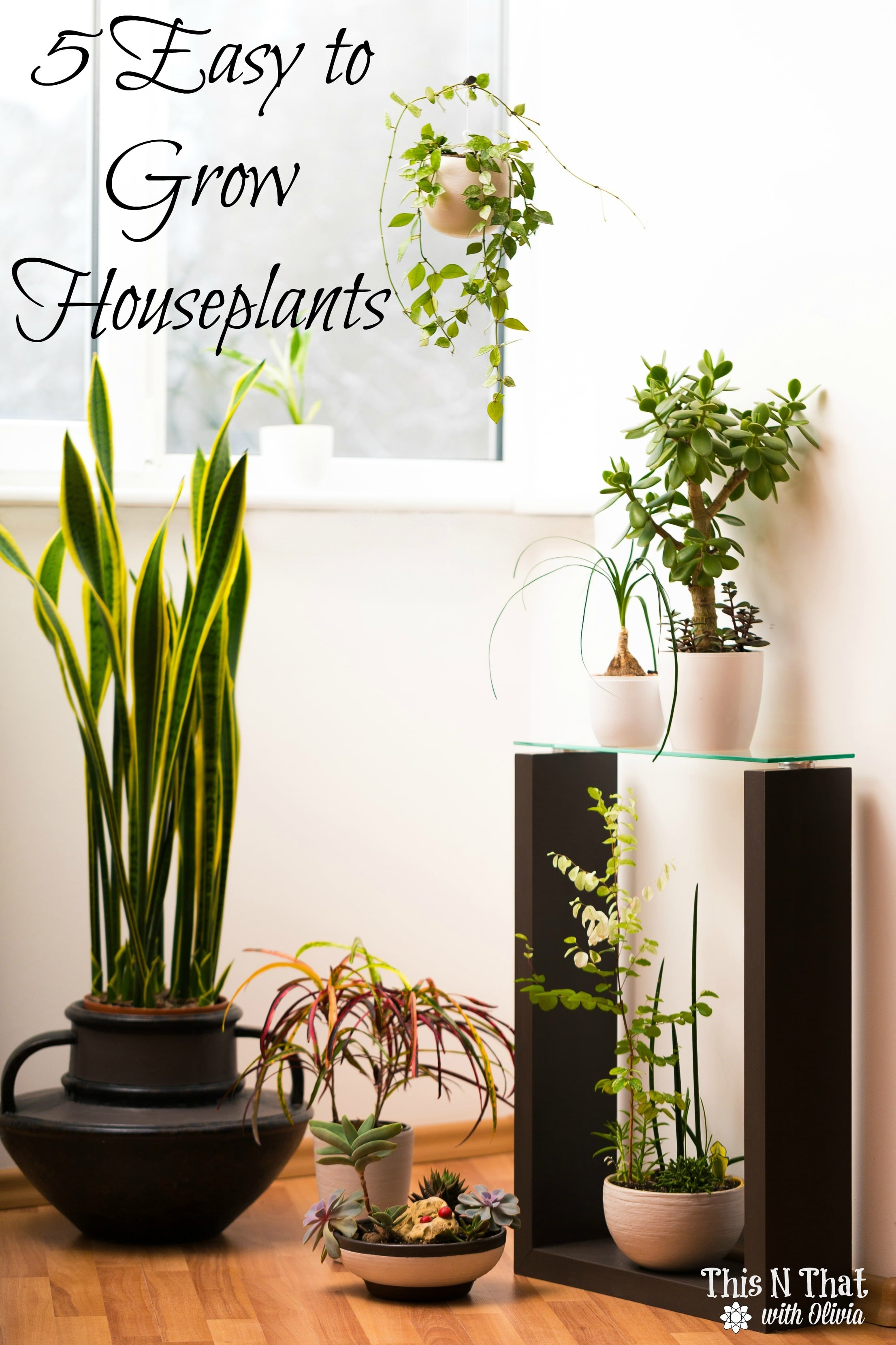 5 Easy to Grow Houseplants!