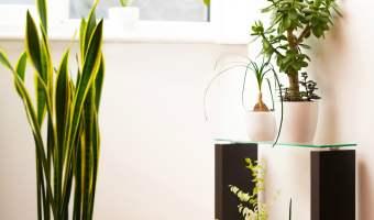5 Easy to Grow Houseplants!