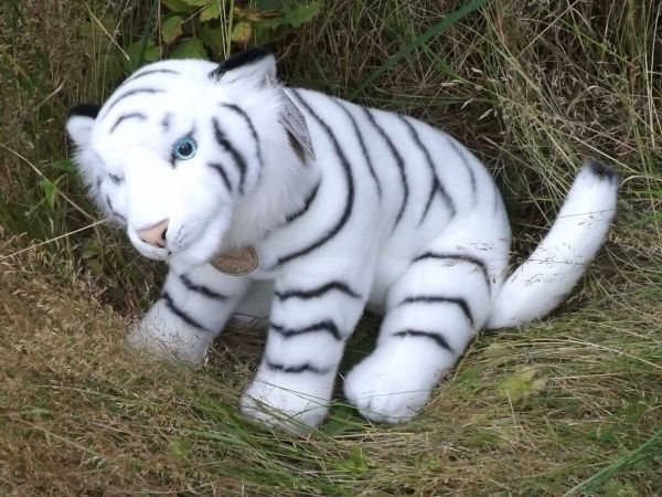 Stuffed White Tigers Product Categories